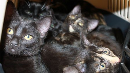 Cats dumped at Celia Hammond's animal welfare organisation in Barking Road, Canning Town 2