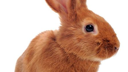 Rabbit muesli could cause dental and digestive problems, says Pets at Home