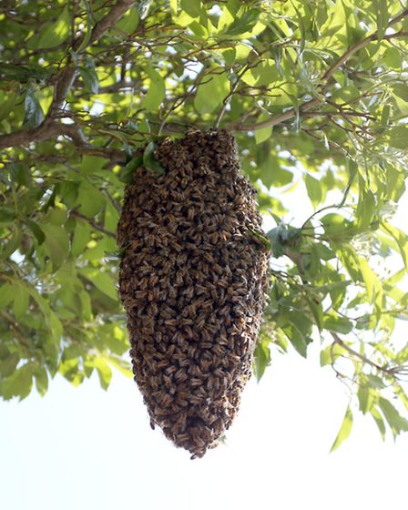 The swarm outside a house in The Avenue, Wanstead