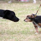 Photos from todays Havering Happy Hounds Dog Show in Central Park, Harrold Hill