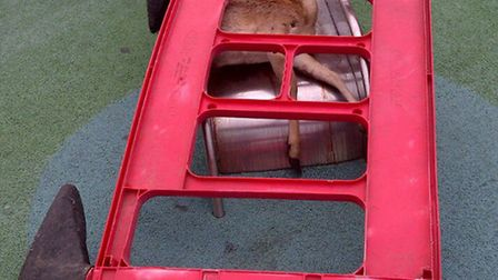 Deer found on a slide in a children's play area in Chandos Road Gardens.