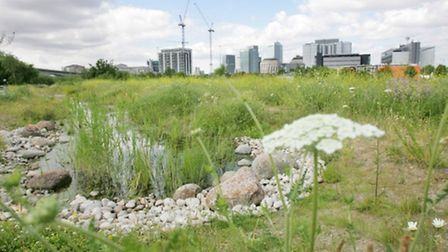 Bow Creek Ecology Park has received a Green Flag Award