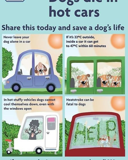 """RSPCA """"Dogs die in hot cars"""" information poster."""