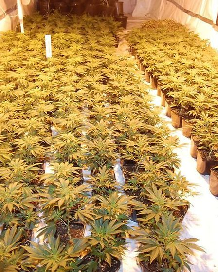 A cannabis factory was also found during the police raids last November