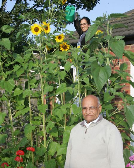 Ghulam Muhammed Patel and daughter Rabia Patel with the sunflower