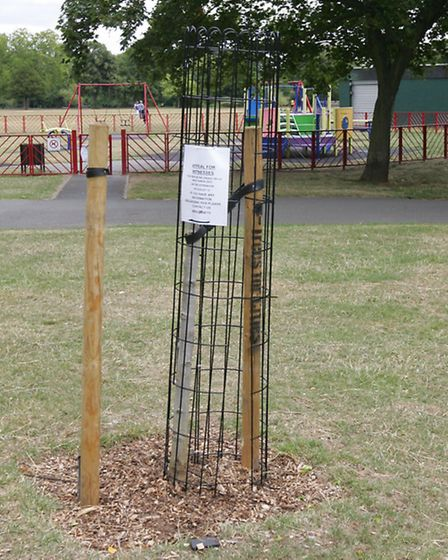 A speciality liquid ambertree, planted by children from South Park Junior School in conjunction wit