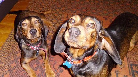 Velma, closest to camera, has been missing for three weeks. To the left is Roxy. Picture: Nick Mill