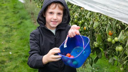 Six-year-old Jonty Williams with freshly-picked tomatoes