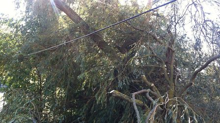 Officers had to deal with a willow tree that had fallen on an electric cable