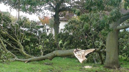 Yesterday's storm brought down trees throughout the borough