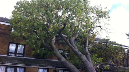 A tree smashed against a block of flats in Mossford Green during the storm
