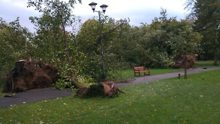 Trees have been uprooted in Christchurch Green, High Street, Wanstead Photo: Lee Thompson via email
