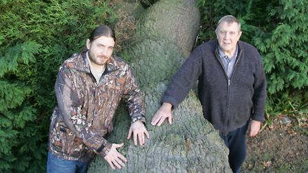 Nick and David Willats with the fallen oak tree