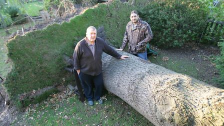 David (L) and Nick Willats with the fallen oak tree
