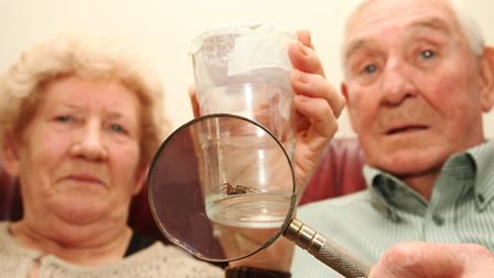 James and Lilian Brady, of Sussex Road, East Ham, show the spider they founded in their bedroom.