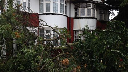 The tree of heaven just missed the home in Marlands Road, Clayhall. Picture: Christina Jarvis
