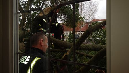 Firefighters work to clear the tree of heaven in Marlands Road so the family could get out the house
