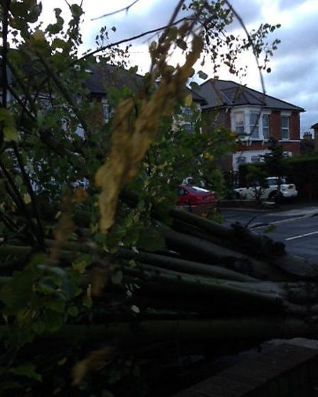 The fallen tree in Woodland Road, Ilford (pic: Ghulam Mustafa via e-mail)
