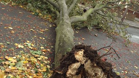 A tree down in Macdonald Avenue, Hornchurch (pic thanks to Alison Braun via e-mail)