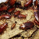 Newham has one of the highest levels of cockroach infestation in England