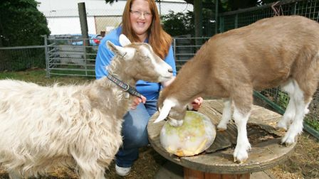 volunteers at Wellgate Farm are making ice pops for the animals to keep them cool - with turnips and