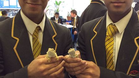 Year 11 twins Kevin and Novin Premadeva with the two bearded dragons