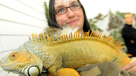 Nicky Cook holds Charlie the Green iguana at a reptile house in East Ham Market Hall.