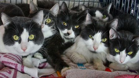 The cats, who are thought to all be from the same family, are being cared for at Celia Hammond Anima