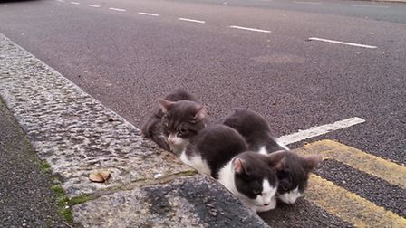 This photo shows the cats as they were found in Manor Park, huddled in the gutter