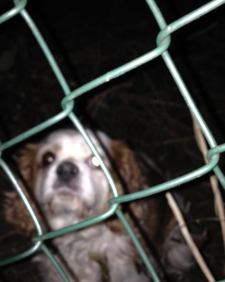 Dougal the dog had to be rescued when he got stuck. Picture: Deborah Parry