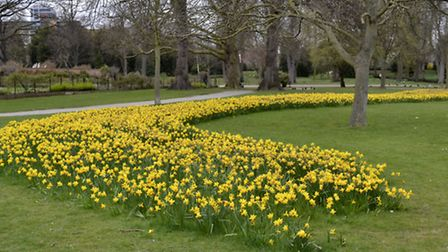 The Great British Bake off planted 45,000 bulbs in the park. Picture: Ron Jeffries on iWitness24