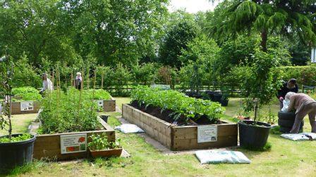 Green fingered residents of all ages can pop along to West Ham Park for an afternoon of food plantin