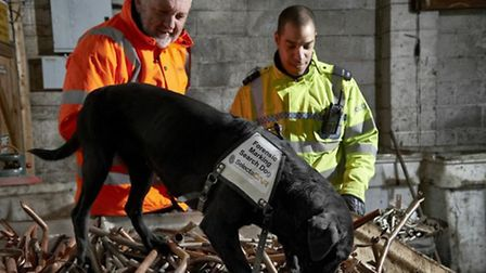 Jazz the metal-sniffing dog at work. Picture: Met Police