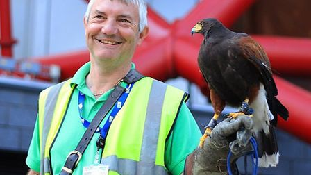 One of the Harris Hawks used to scare off pigeons at Queen Elizabeth Olympic Park