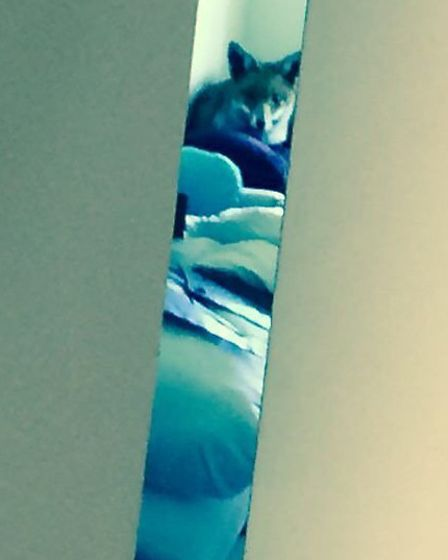 The fox, pictured through the bedroom door, did not leave the the house for more than an hour