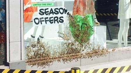 The plague of bees was cordoned off outside Topshop. (Photo:Yvette Casallas)