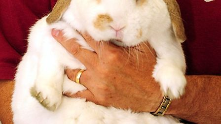 Snowball is 35 per cent overweight. Picture: PDSA