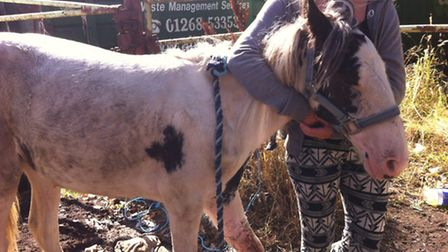 The piebald yearling horse (Picture: RSPCA)