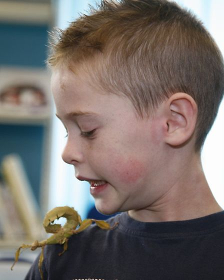 Snakes Alive at Gidea Park Library. Oliver Milne, 7, with a giant prickly stick insect called Spike