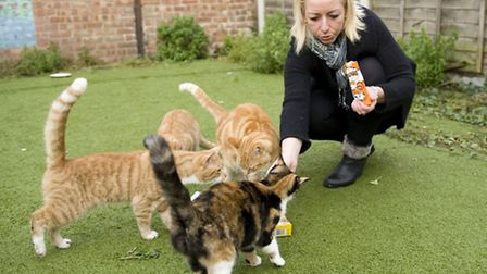 Michelle has been feeding and looking after the abandoned cats but now she has got to find them home