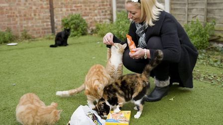Feeding the cats is costing Michelle up to �30 a week (photo: Arnaud Stephenson)