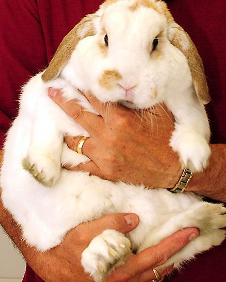 Snowball was 35 per cent overweight.