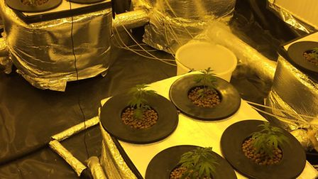 Newham Police closed down a cannabis factory in Gladding Road, Manor Park