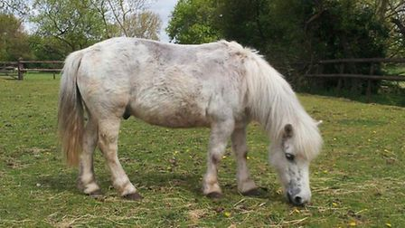 Hopefield Animal Sanctuary in Brentwood. Picture: Hopefield Animal Sanctuary