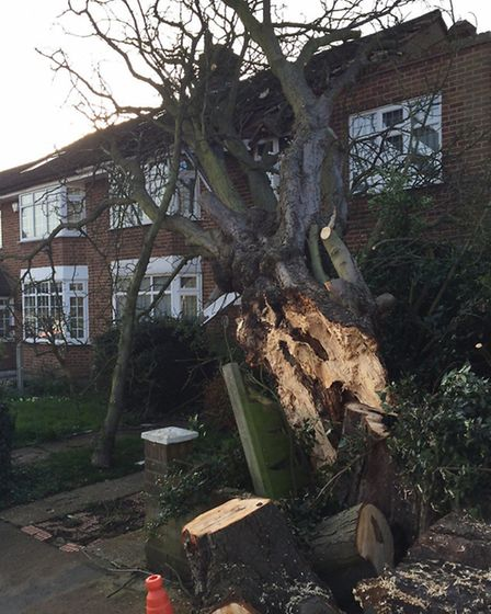 A tree fell on a house in Lambourne Road, Chigwell. Picture: Ryan Battles/@battles1