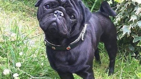 Pet pug Winston was mauled to death by another dog in Beckton