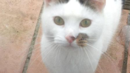 Angel was fatally shot on Wednesday, May 13. Picture: RSPCA