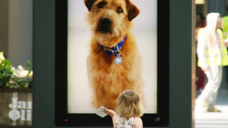 A young girl engages with Barley as part of Battersea Dogs and Cats Home's interactive billboard cam