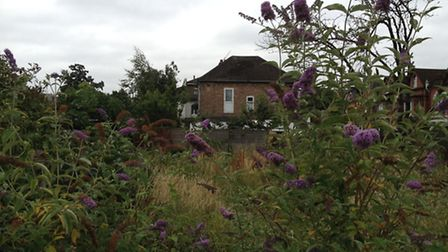 The site is going to be transformed into a wildlife garden.