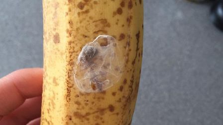 The last banana in the bunch had this suspected spiders nest on it. Picture: Michaela Egan